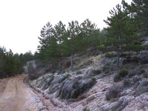 Pista forestal que sube de la Font del Arbre